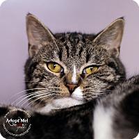 Adopt A Pet :: Della - Lyons, NY
