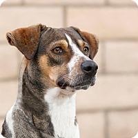 Adopt A Pet :: Lady - Coronado, CA