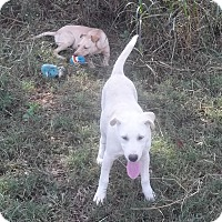 Adopt A Pet :: Nadine IN ct - Manchester, CT