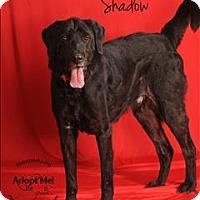 Adopt A Pet :: Shadow - Topeka, KS