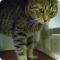 Adopt A Pet :: Gary - Hamburg, NY