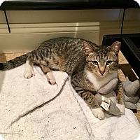 Adopt A Pet :: Jessica - Surrey, BC