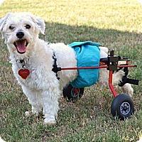 Adopt A Pet :: *Sunny - PENDING - Westport, CT