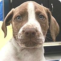 Adopt A Pet :: Ruby B#1M - Orlando, FL