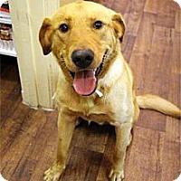 Adopt A Pet :: Yogi - Cumming, GA