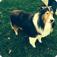 Adopt A Pet :: Trixee - Plainfield, IL