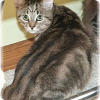 Adopt A Pet :: Reggie - Howell, MI