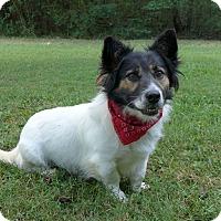 Adopt A Pet :: Azoo - Mocksville, NC