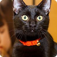 Adopt A Pet :: Cooper - Irvine, CA