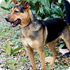 Adopt A Pet :: DRAKE