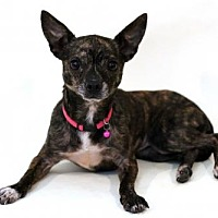 Adopt A Pet :: Gloria - Bloomington, MN