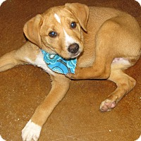 Adopt A Pet :: Tinkerbell - Charlemont, MA