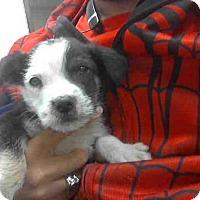Adopt A Pet :: A268529 - Conroe, TX
