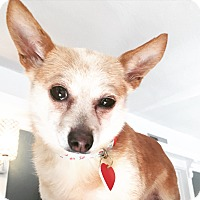 Adopt A Pet :: Lady Grace Daintyslippers - Los Angeles, CA