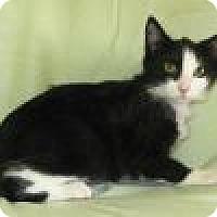 Adopt A Pet :: Nexus - Powell, OH