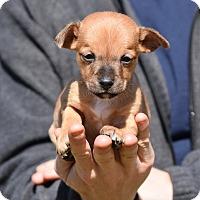 Adopt A Pet :: Cole - Groton, MA