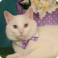Adopt A Pet :: Olaf - mishawaka, IN