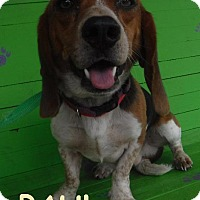 Adopt A Pet :: Paul - Batesville, AR