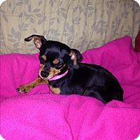 Adopt A Pet :: Maddie - Homewood, AL
