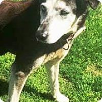 Adopt A Pet :: Sally - Charlottesville, VA
