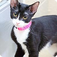 Adopt A Pet :: Eileen - Chula Vista, CA