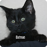 Adopt A Pet :: Batman - Idaho Falls, ID