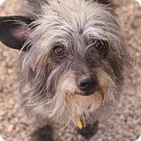Adopt A Pet :: Lexi - Phoenix, AZ