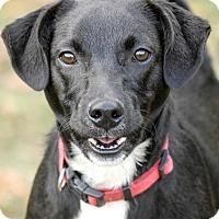 Adopt A Pet :: luke - Johnson City, TN