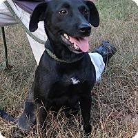 Adopt A Pet :: Precious - Towson, MD
