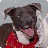 Adopt A Pet :: Haley - Flint, MI