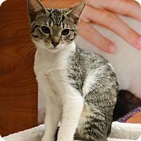 Adopt A Pet :: Blaire - Athens, GA