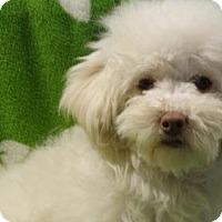 Adopt A Pet :: Lady Diana - Vacaville, CA