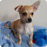 Adopt A Pet :: Chico - Stockton, CA