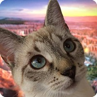 Adopt A Pet :: Tiny - Columbus, OH