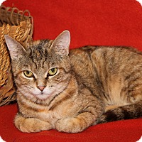 Adopt A Pet :: Nevaeh - Marietta, OH