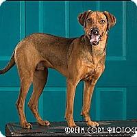 Adopt A Pet :: Bahb - Owensboro, KY