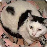 Adopt A Pet :: Delores - San Ramon, CA