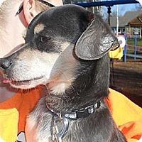 Adopt A Pet :: JINKX - Portland, OR