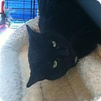 Adopt A Pet :: Bridget - West Dundee, IL