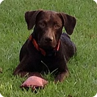 Adopt A Pet :: Harley2 - Tallahassee, FL