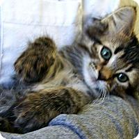 Adopt A Pet :: Bunny - Toledo, OH