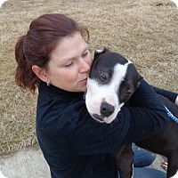 Adopt A Pet :: Juno LOVABLE SOUL - Tunica, MS