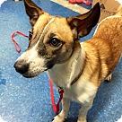 Adopt A Pet :: Stitch (fka Milo) (Has Application)
