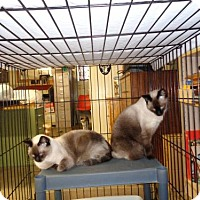 Adopt A Pet :: Zuri & Zumi - Golden Valley, AZ