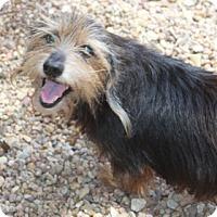 Adopt A Pet :: Flynn - Meet Me!! - Norwalk, CT