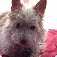 Adopt A Pet :: Sunshine - San Francisco, CA
