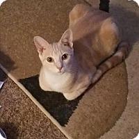 Adopt A Pet :: Jacob - Spring, TX