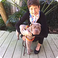 Adopt A Pet :: Gunnar - Gainesville, FL