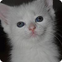 Adopt A Pet :: Marie - Herndon, VA