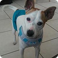 Adopt A Pet :: Pinky - Homestead, FL